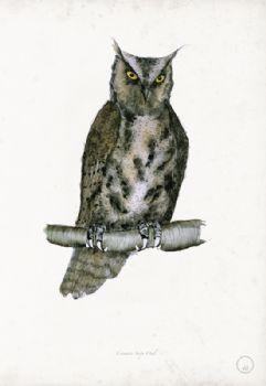 Common Scops Owl - artist signed print